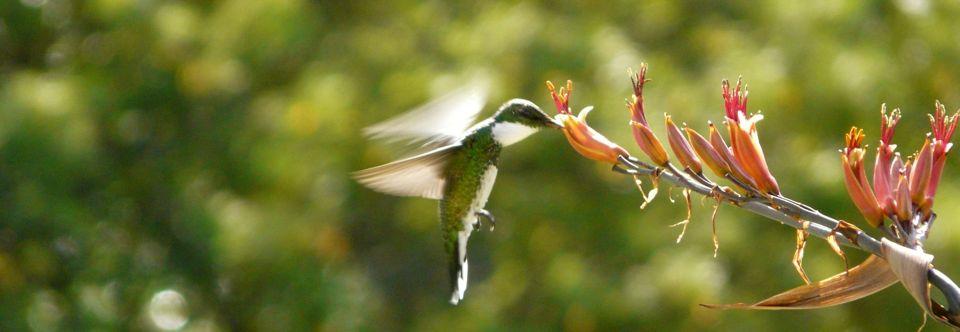 Beija-Flor em Urubici – SC