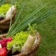 Avançando no Cooperativismo Agroecológico